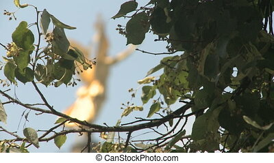 Victory Angel Of Berlin - Angel of Victory behind some green...