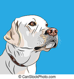 vector white dog breed Labrador Retriever - closeup portrait...