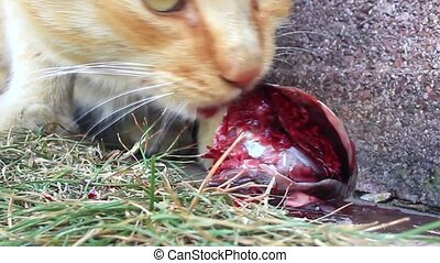 Cat eating fresh fish. Slow motion - Young tabby cat with a...