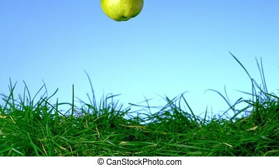 Pear falling in the grass on blue background in slow motion