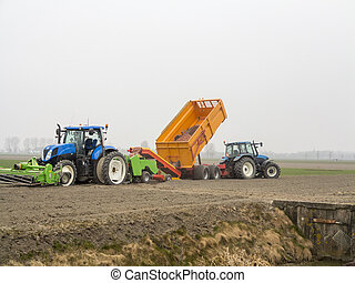 Planting potatoes with a tractor - Potatoes are transferred...