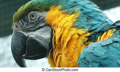 Colorful parrot close up