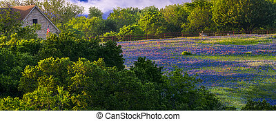 Wildflowers on Sugar Ridge Road - Field of bluebonnets and...