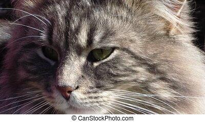 cat - muzzle a cat