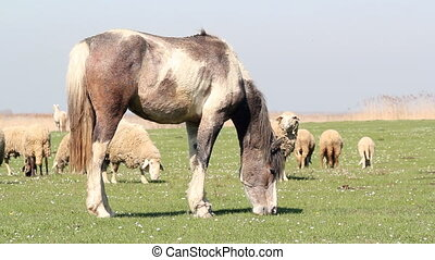 horse and sheep grazing farm scene