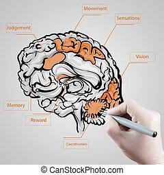 mão, luva, delinear, cérebro, médico,...