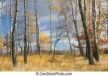 Autumn agricultural landscape