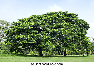 Tree in green park