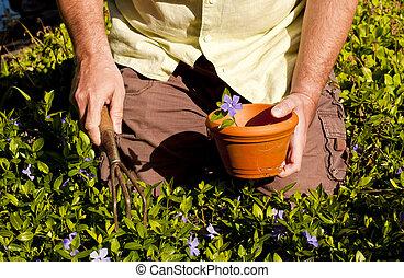 the sunshine flower harvest