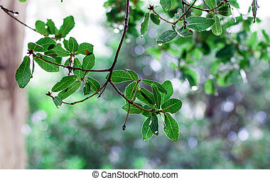 leaves - Green leaves over abstract background