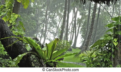 heavy rain in tropical forest. Bali