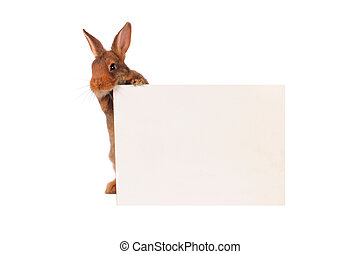 Rabbit with sheet for a text writing
