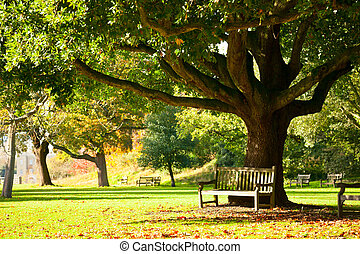 Kew Gardens park - Bench under the tree in the Royal Botanic...