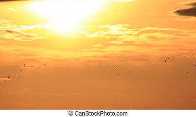 Birds flock in sunset - Birds flight at sunset sky...