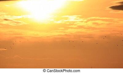 Birds flock in sunset