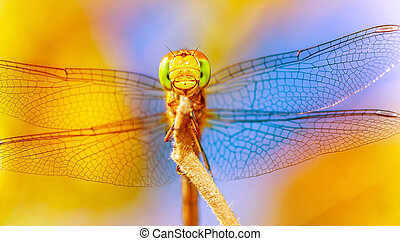 Beautiful dragonfly - Closeup of beautiful dragonfly on...