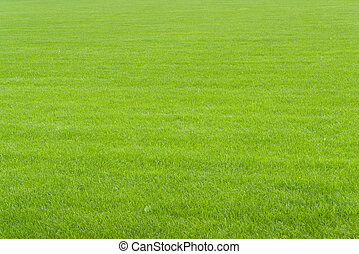 Grass Field - Perspective of a field of green grass evenly...