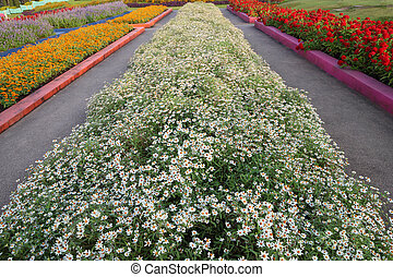 Row of flowerbed in agriculturist farm