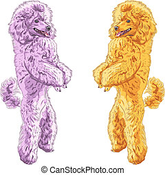 vector two dogs Poodle breed standing on his hind legs -...