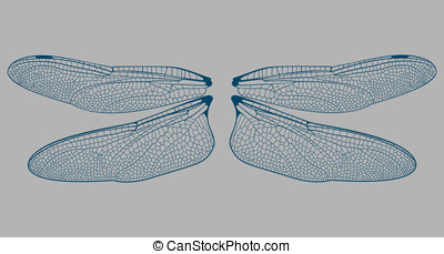 Dragonfly Wings - This is a set of Dragonfly wings.