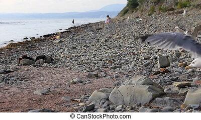 Wild stony coast - Wild stony beach coast landscape
