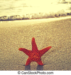 seastar on the shore of a beach