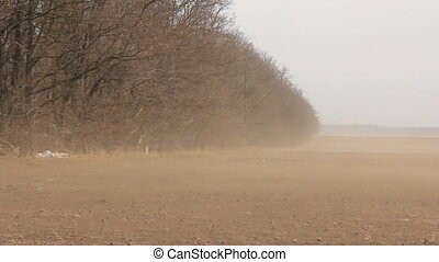 Dust storm go on forest line from field