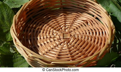 nut drop wicker wood dish - closeup ripe hazel nutwood...