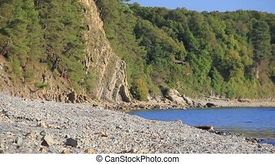 Wild stony coast with forest