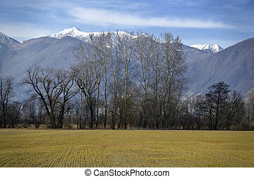 Field with trees and snow-capped mountains