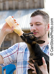 Man Bottle Feeds Goat - Man bottle feeds a baby Nigerian...