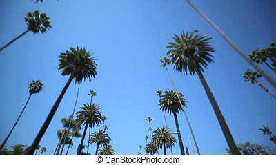 Palm Tree Drive - Driving through Palm Trees in Beverly...
