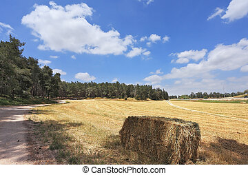 The stack of wheat at the edge of the forest