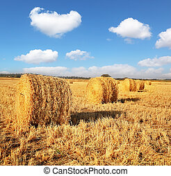 Field after harvesting