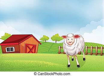 A sheep at the farm