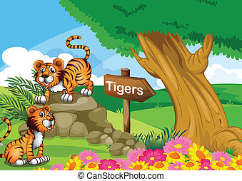 Two tigers near the signboard