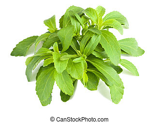 stevia bunch isolated on white