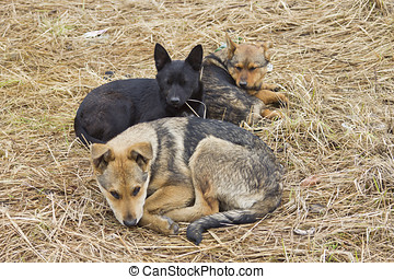three stray dogs lying on the ground