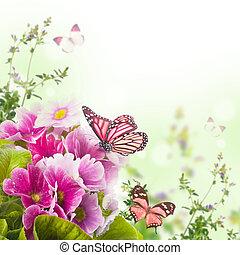 papillon, primevère, Printemps, fond,  Bouquet,  floral