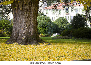 Tree in a park with yellow autumn leaves