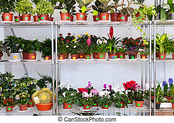 Shelves with flowers in pots