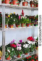 Shelves in flowers shop