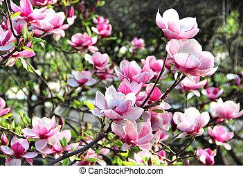 Spring trees in bloom
