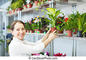 florist with Dieffenbachia at store - florist with...