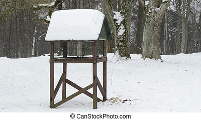 bird feeder winter snow - wooden bird feeder in park and...