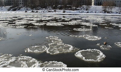 ducks ice floe river - frozen ice floats down the river and...