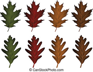 Oak Leaves-Black Oak and White Oak - Illustration of two...