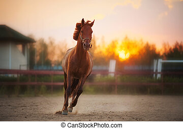 brown horse running at sunset