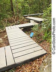 木製である, 板張り遊歩道, 通り道, 森林, 印