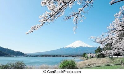Mt Fuji with cherry blossom